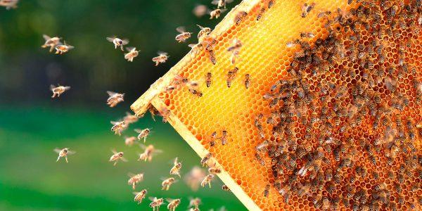 Überblick der Honigsorten